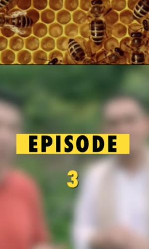 Is REAL Honey Sweet?